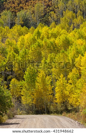 a country road curves past a grove of yellow aspen trees in the autumn - stock photo
