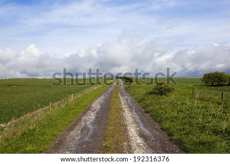 a countryside farm track running through wheat fields on the yorkshire wolds under a cloudy blue sky