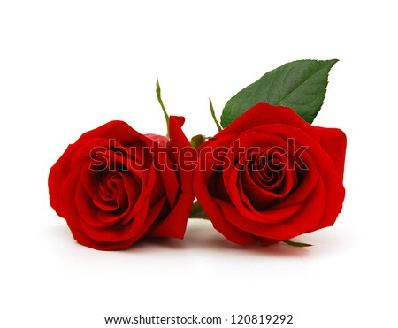 A couple gift roses on valentine day - stock photo