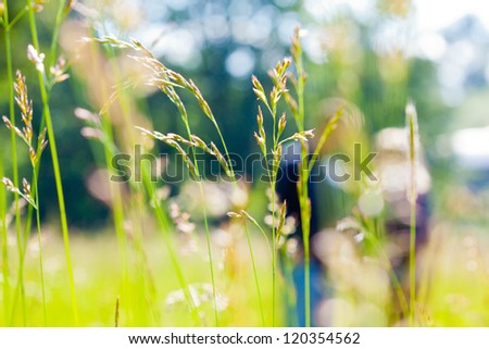 A couple is out of focus behind some green grass in a field or meadow.