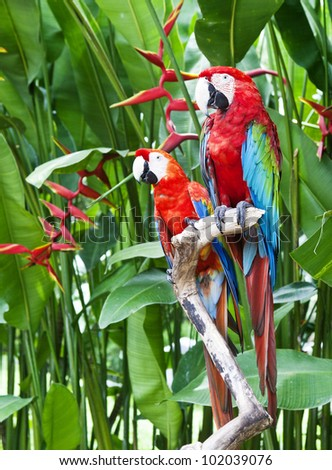 A couple of beautiful macaws