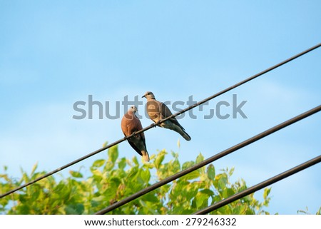 A couple of doves - stock photo
