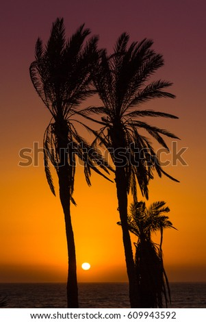 A couple of palm trees silhouetted against the sunset over the Atlantic Ocean, captured on the coast of Morocco.