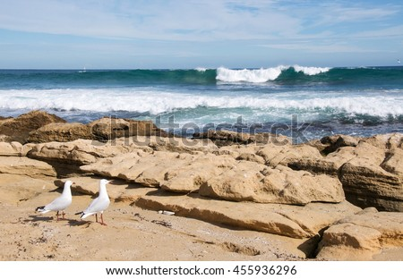 A couple of sea gulls facing the Indian Ocean swell at Penguin Island in Rockingham, Western Australia/Sea Gulls: Ocean Meditation/Penguin Island, Rockingham, Western Australia