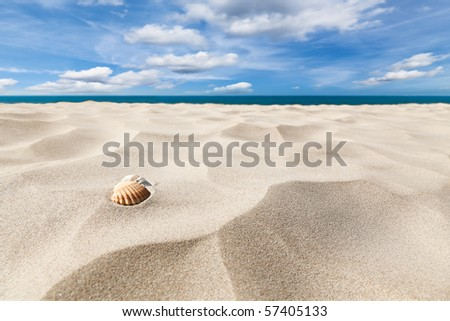 A couple of shell nuts on a tropical sandy beach. Dramatic blue cloudy sky. - stock photo