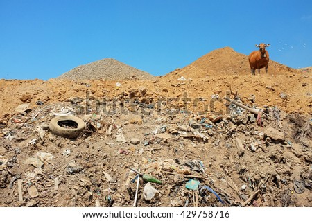 A cow scavenges for food amid plastic bags, garbage, hazardous household waste and toxic trash at the biggest and most polluted landfill site on the holiday resort island of Bali, Indonesia. - stock photo