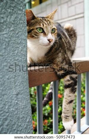 A curious cat in Hong Kong - stock photo
