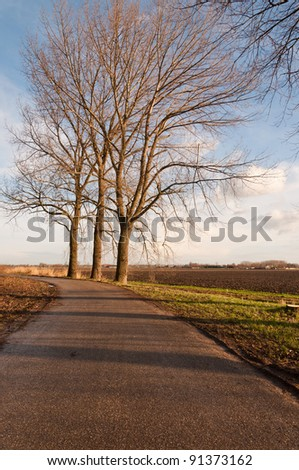 A curved road and three slanted trees before cutting down. - stock photo