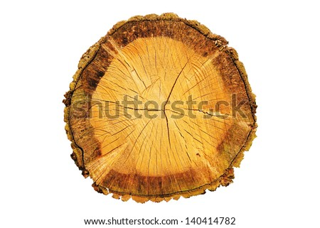 A cut log isolated on a white background - stock photo