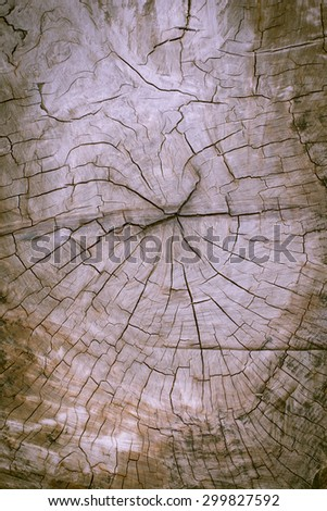 A cut tree and tree rings - stock photo