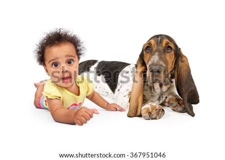 A cute and happy six month old baby girl crawling on the floor with a white background - stock photo