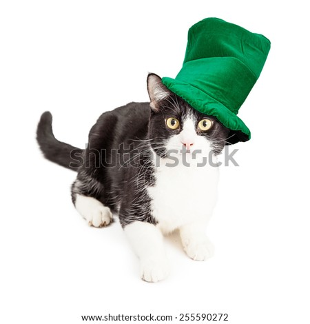 A cute black and white domestic short hair cat wearing a green St Patrick's Day Hat - stock photo