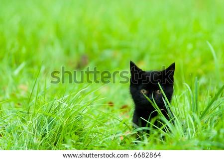 a cute black kitten in the grass - stock photo