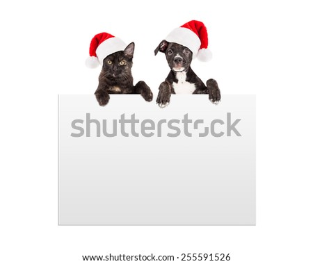 A cute black puppy and kitten wearing Santa Claus hats with paws over a blank sign - stock photo