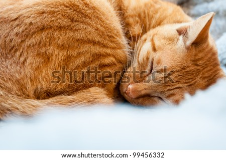 a cute brown cat sleeping peacefully on bed - stock photo