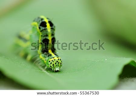 a cute caterpillar on leaf - stock photo