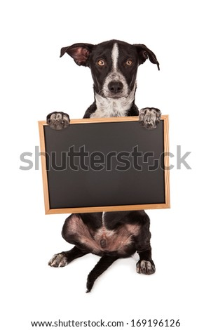 A cute crossbreed puppy holding a blank chalk board sign