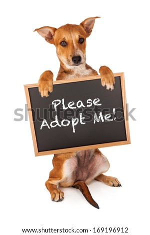 A cute crossbreed puppy holding a sign that says Please Adopt Me - stock photo