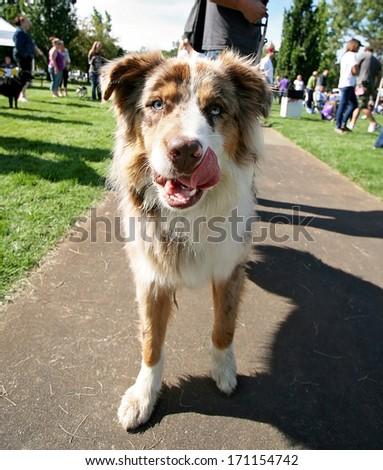 a cute dog at a local public park - stock photo