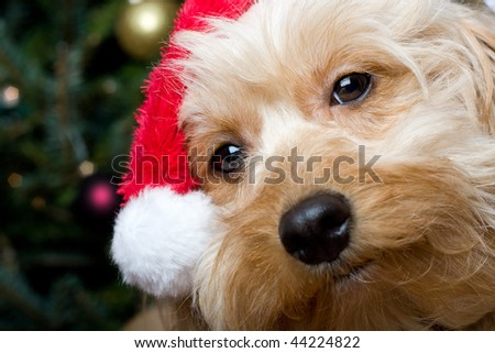 a cute dog in front of a christmas tree with a santa hat - stock photo