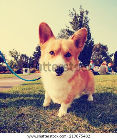 a cute dog in the grass at a park during summer toned with a retro vintage instagram filter effect - stock photo