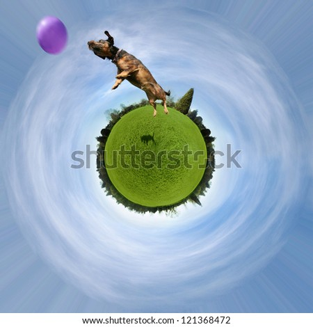 a cute dog on a green sphere jumping at a ball - stock photo