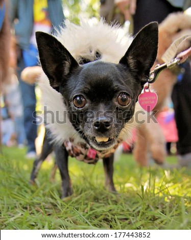 a cute dog on the grass at a local park during summer - stock photo