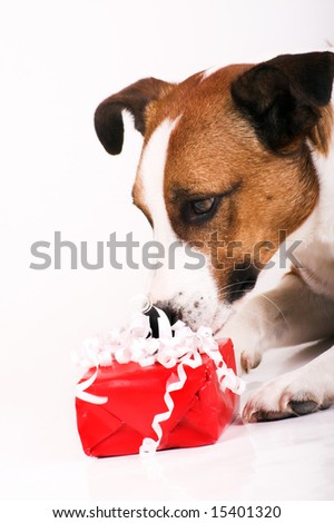 a cute dog with a red gift - stock photo