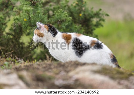 A cute domestic cat on the rock is staring at something right side. Outdoors portrait of mixed-breed cat. Color image - stock photo