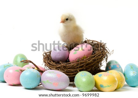 A Cute Easter Chick in a Nest Surrounded by Colorful Eggs - stock photo