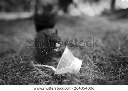 A cute funny squirrel has found a treat to eat. - stock photo