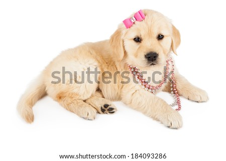 A cute Golden Retriever puppy wearing a pink necklace and hair bow - stock photo