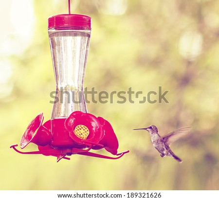 a cute hummingbird hovering at a nectar feeder done with a retro vintage instagram filter  - stock photo