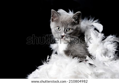 a cute kitten or cat playing in some feathers on an isolated black background - stock photo