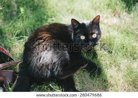 A cute little black cat lying and playing on the green grass - stock photo