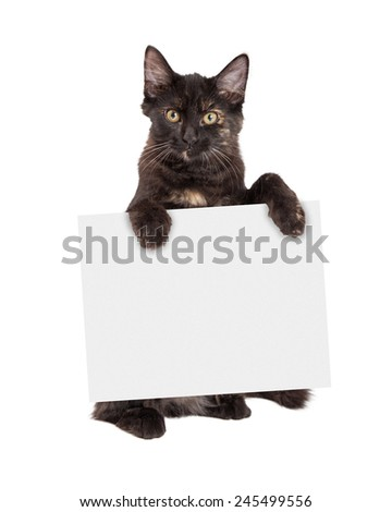 A cute little black kitten standing on hind legs holding blank sign - stock photo