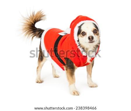 What Breed Of Dog Is Santa S Little Helper