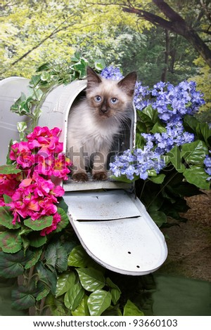 A cute little Himalayan Kitten in Mailbox surrounded by pink and blue flowers, ivy, and woods - stock photo