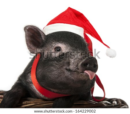 a cute little pig with santa cap sitting in a basket - stock photo