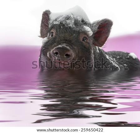 a cute little piggy with a soap foam - hygiene concept - stock photo