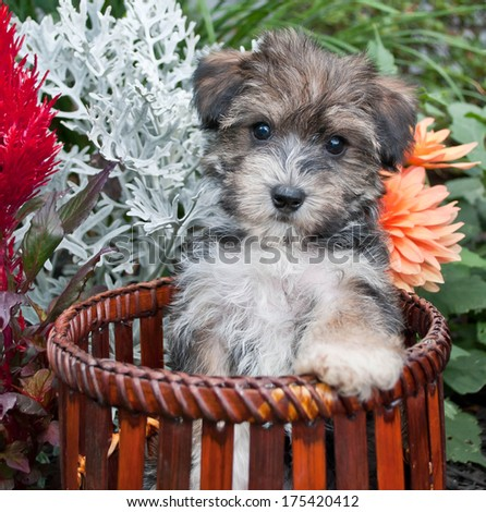 A cute little puppy sitting in a basket in the middle of a flower garden.
