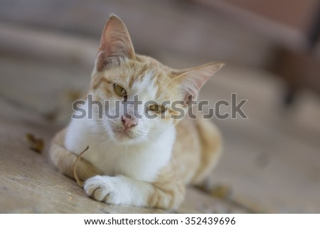 A cute orange cat lying on the ground waiting for food from people. - stock photo