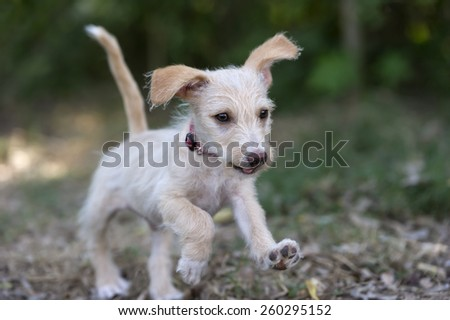 A cute playful puppy is running in the park. - stock photo