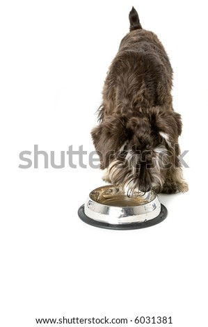 A cute puppy going for a drink - stock photo