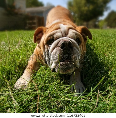 a cute puppy in the grass - stock photo