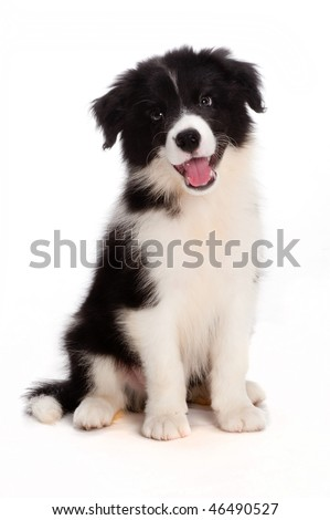 A cute puppy on white background - stock photo