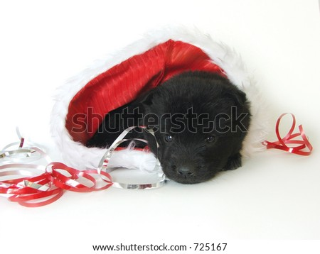 A cute puppy rests in a santa hat. - stock photo