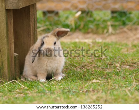A cute rabbit with floppy ears sits on the grass. - stock photo
