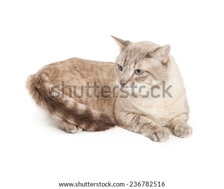 A cute silver and brown color cat laying down and looking to the side - stock photo