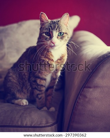 a cute small cat or kitten looking at the camera sitting on a couch or sofa with natural light toned with a retro vintage instagram filter app or action effect - stock photo